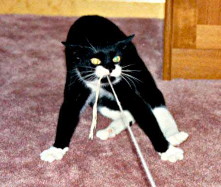 Felix with string