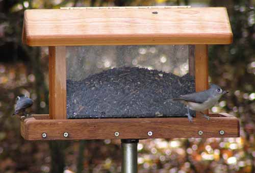 Red-Breasted Nuthatch at hopper