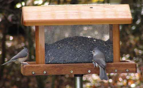 Titmice at Hopper feeder