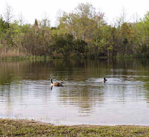 Higbee Pond