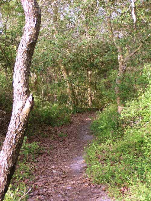 Higbee Woods