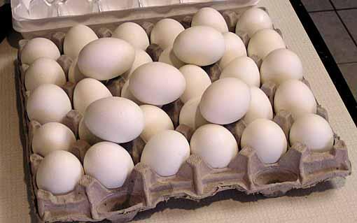 eggsboiled