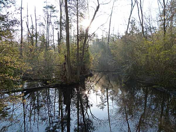 BelleplainBeaverPond