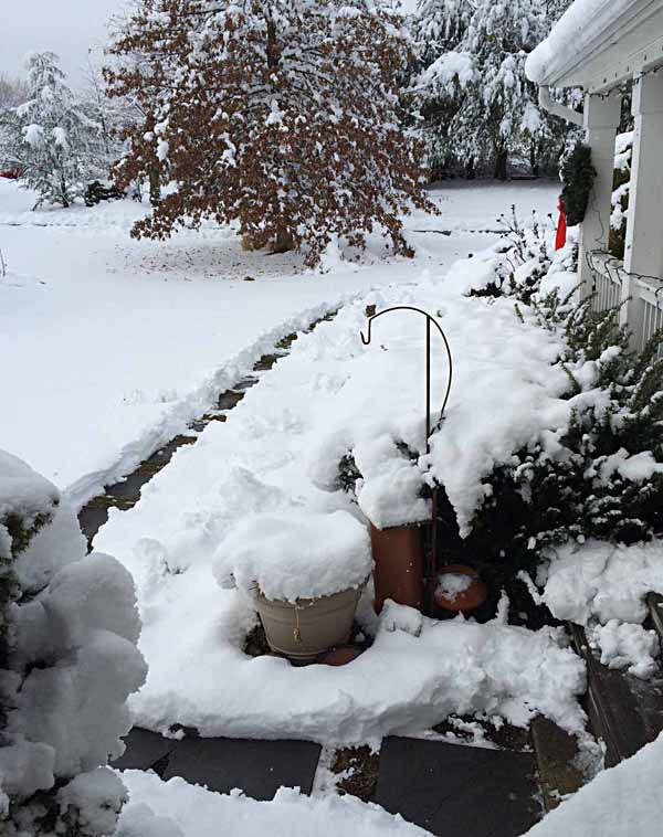SnowyThanksgiving